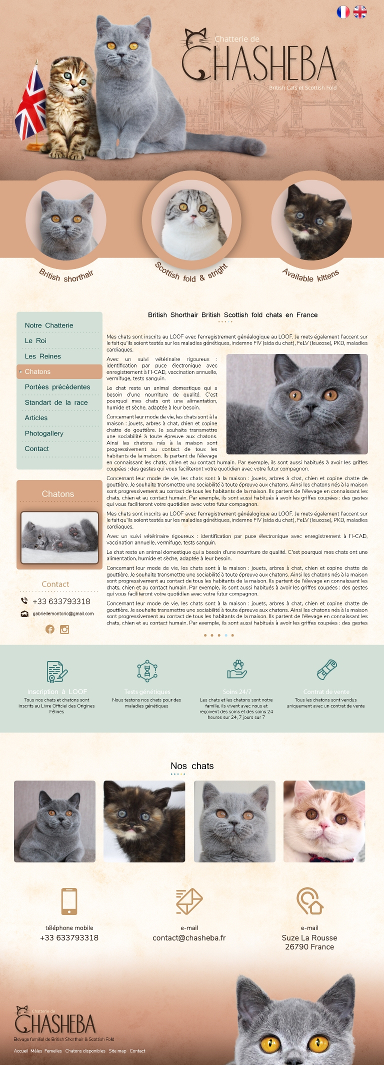 Сайт питомника британских кошек, создание сайтов для питомников