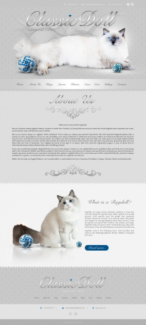 Website for breeders, website for ragdoll cats cattery