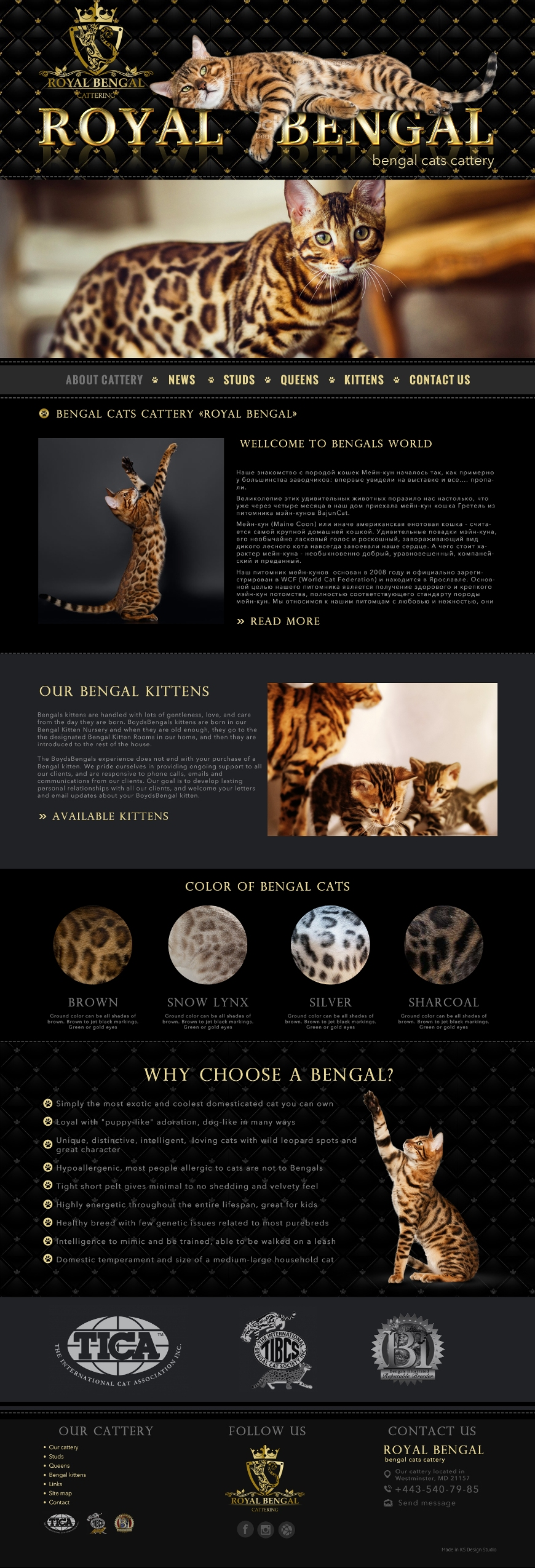 Красивые сайты для питомников кошек, веб-дизайн сайта для питомника